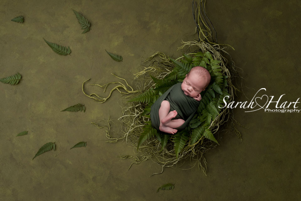 baby nestled in to green ferns and twigs, stunning baby artwork