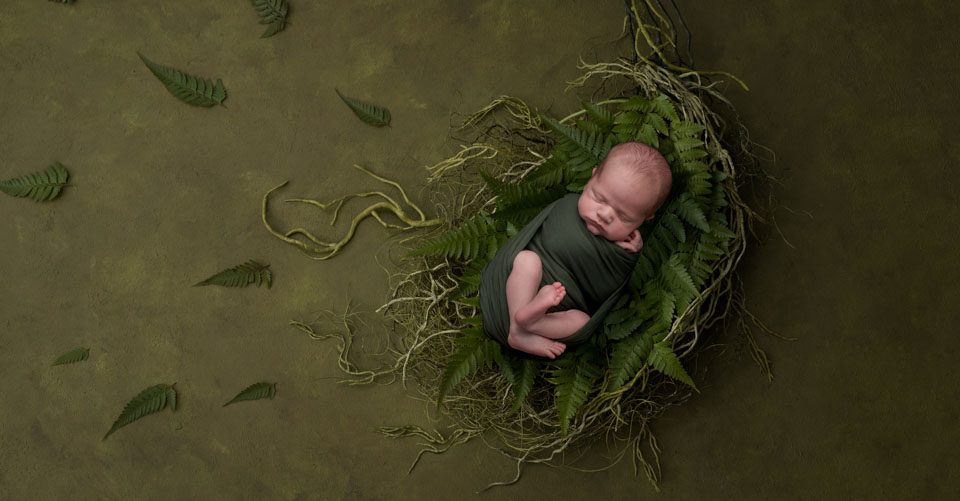 baby on fern basket, fern leaves and dark green tones, baby pics kent