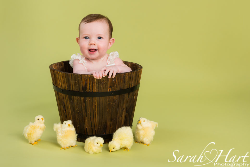 green backdrop, girl in bucket with chicks, Tonbridge Spring photo sessions
