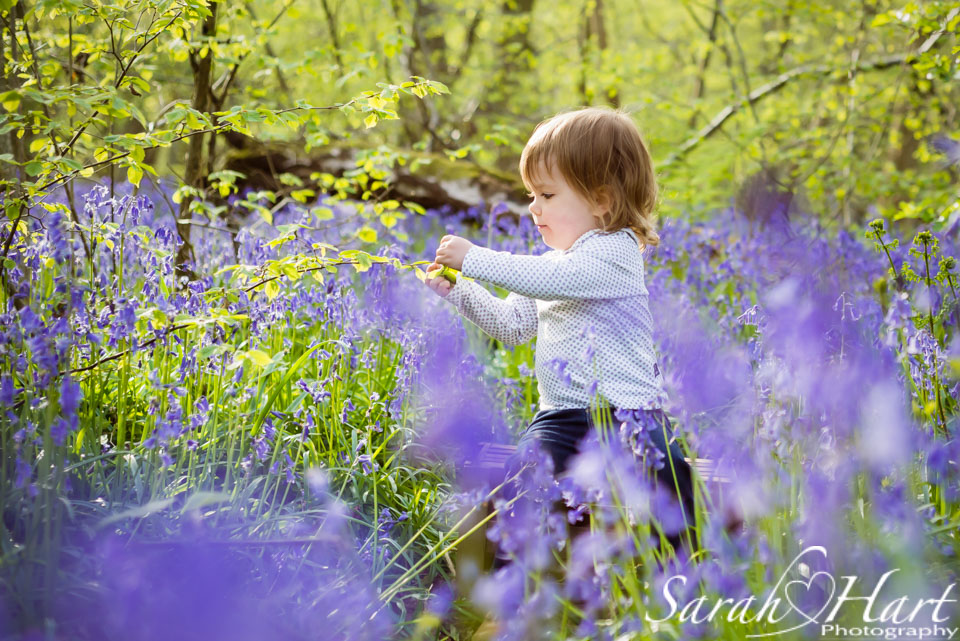 girl in the bluebells, Kent countryside photography, Tonbridge, Plaxtol photographer