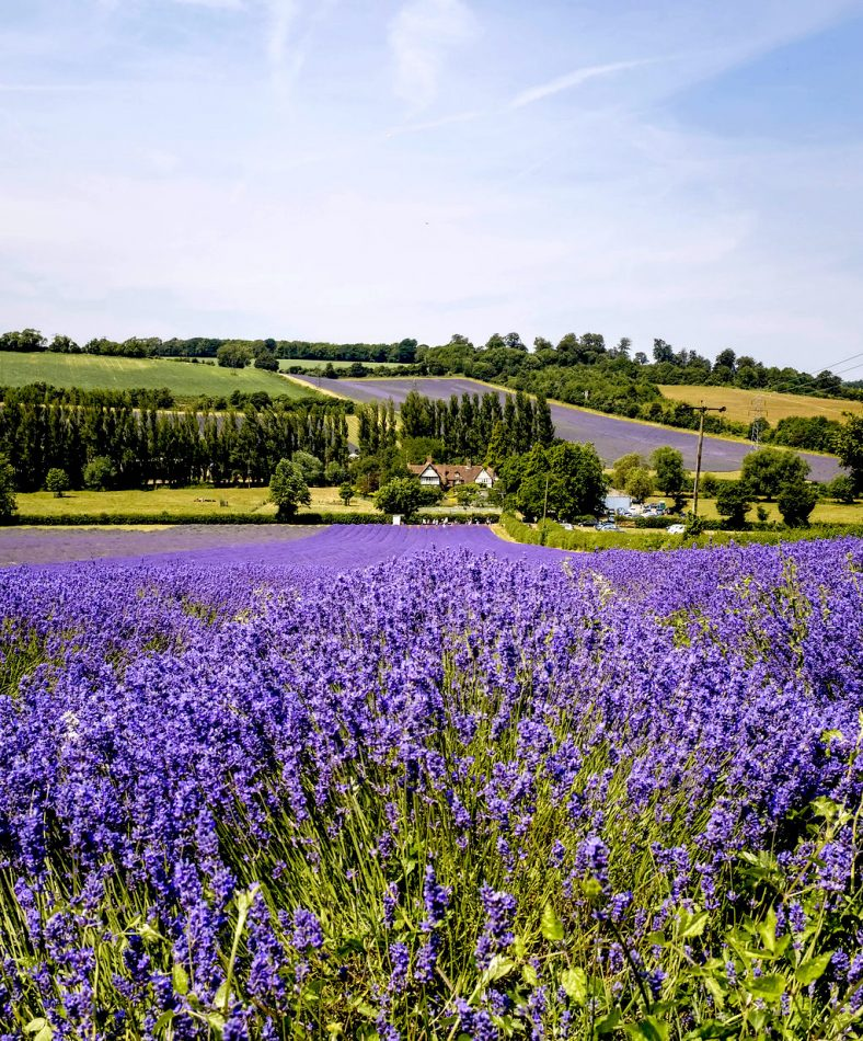 Lavender Family Photography session location - in Shoreham, Kent